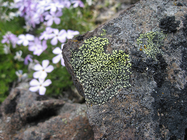 Could be lichen outer space. Photo: [J Brew](https://www.flickr.com/photos/brewbooks/4784053254)